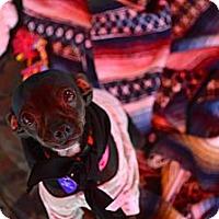 Adopt A Pet :: Violet (aka Dancer) - Oakley, CA