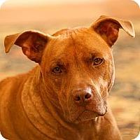 Adopt A Pet :: ZOE - Vista, CA