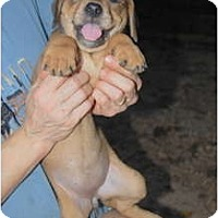 Adopt A Pet :: Esther - Douglasville, GA