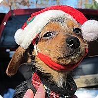 Adopt A Pet :: Kandy Kane - Windham, NH