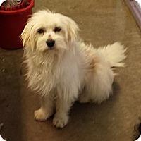 Adopt A Pet :: Wembley - Phoenix, AZ