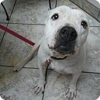 Adopt A Pet :: Dannie - Justin, TX