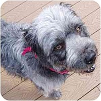 Adopt A Pet :: Howie - Phoenix, AZ