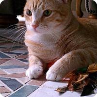 Adopt A Pet :: Crimson - West Palm Beach, FL