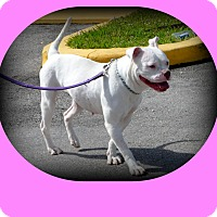 Adopt A Pet :: Miss Pink - Miami, FL