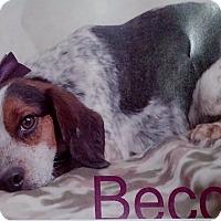Adopt A Pet :: Becca - Delaware, OH