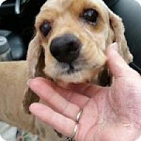 Adopt A Pet :: Tate - Alpharetta, GA