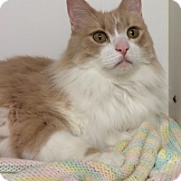 Adopt A Pet :: Max - Mission Viejo, CA