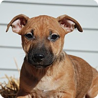 Adopt A Pet :: Butternut - Derry, NH