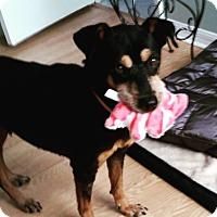 Adopt A Pet :: Jessie - New Smyrna Beach, FL