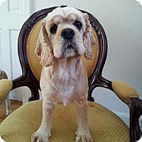 Adopt A Pet :: Lenox - Edgewater, NJ