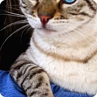 Adopt A Pet :: Jonah - Davis, CA