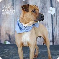 Rhodesian Ridgeback Mix Dog for adoption in Conroe, Texas - AUSTIN