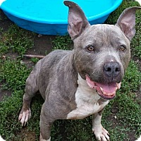 Adopt A Pet :: Tinker - Fayette City, PA