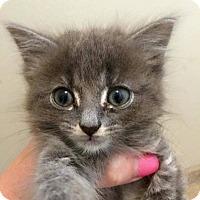 Adopt A Pet :: Sweet Pea - Toms River, NJ