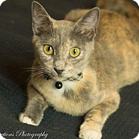 Adopt A Pet :: Chloe - Ocala, FL
