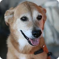 Adopt A Pet :: Jasmine - Canoga Park, CA