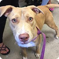 Adopt A Pet :: Mary - Morehead, KY