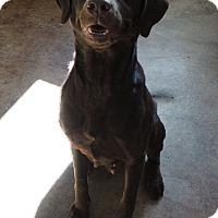 Adopt A Pet :: Gina - House Springs, MO