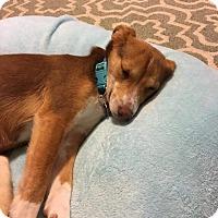 Adopt A Pet :: Stocking - Newport, KY