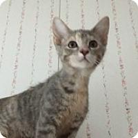 Adopt A Pet :: Charlotte - McHenry, IL