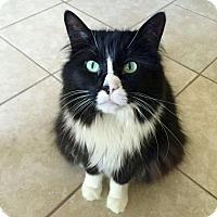 Adopt A Pet :: Payne - Chicago, IL