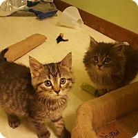 Adopt A Pet :: Katie - Aurora, IL