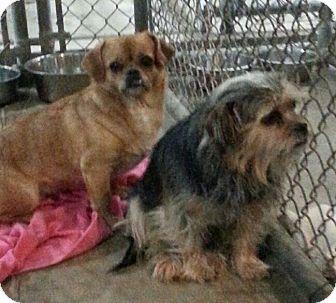 Homeward Bound Dog Rescue Colorado