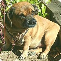 Adopt A Pet :: Tuga - Andalusia, PA