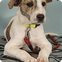 Adopt A Pet :: Ryan - Berkeley Heights, NJ
