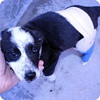 Adopt A Pet :: Winnie - Lumberton, NC