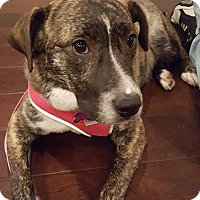 Adopt A Pet :: Audrey ~ Adoption Pending - Youngstown, OH