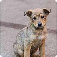 Adopt A Pet :: Eli - Portland, OR