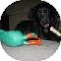 Adopt A Pet :: Luke Skywalker - Denver, CO