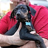Adopt A Pet :: Esmerelda - Richmond, VA