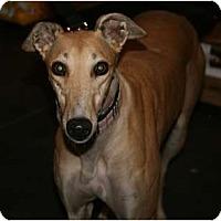 Adopt A Pet :: Pat C Maia