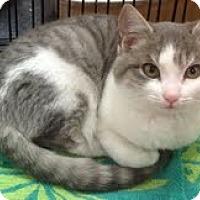 Adopt A Pet :: Angel - Modesto, CA