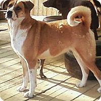Adopt A Pet :: Angie - Toledo, OH