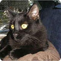 Adopt A Pet :: Annika - Brea, CA