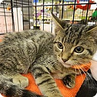 Adopt A Pet :: Sorento - The Colony, TX