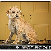 Adopt A Pet :: Lola - Owensboro, KY