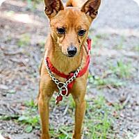 Adopt A Pet :: Ottis - Tinton Falls, NJ