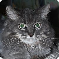Adopt A Pet :: Maggie Sue - North Branford, CT