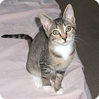 Adopt A Pet :: Pennie - Colmar, PA