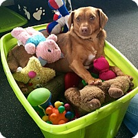 Adopt A Pet :: Cleo - Battle Creek, MI
