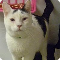 Adopt A Pet :: Justin - Hamburg, NY