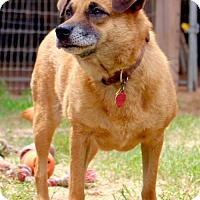 Adopt A Pet :: Nora - San Antonio, TX
