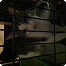Adopt A Pet :: Jasmine - Henderson, NC