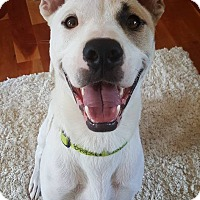 Adopt A Pet :: Bryson - Uxbridge, MA
