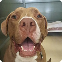 Adopt A Pet :: Meatball - Long Beach, NY